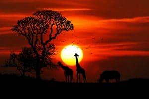 מגלים את דרום אפריקה
