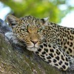 ספארי בטנזניה ונופש בזנזיבר