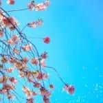 פסטיבל אביבי בגליל לאזרחים וותיקים