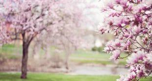 פסטיבל אביבי בגליל לאזרחים ותיקים