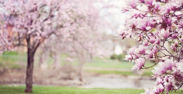 פסטיבל הזהב – פסטיבל אביבי בגליל לאזרחים וותיקים