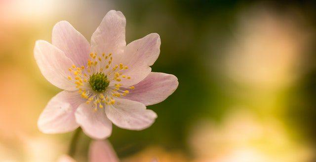 רסיסי זהב 28 – פסח חג האביב